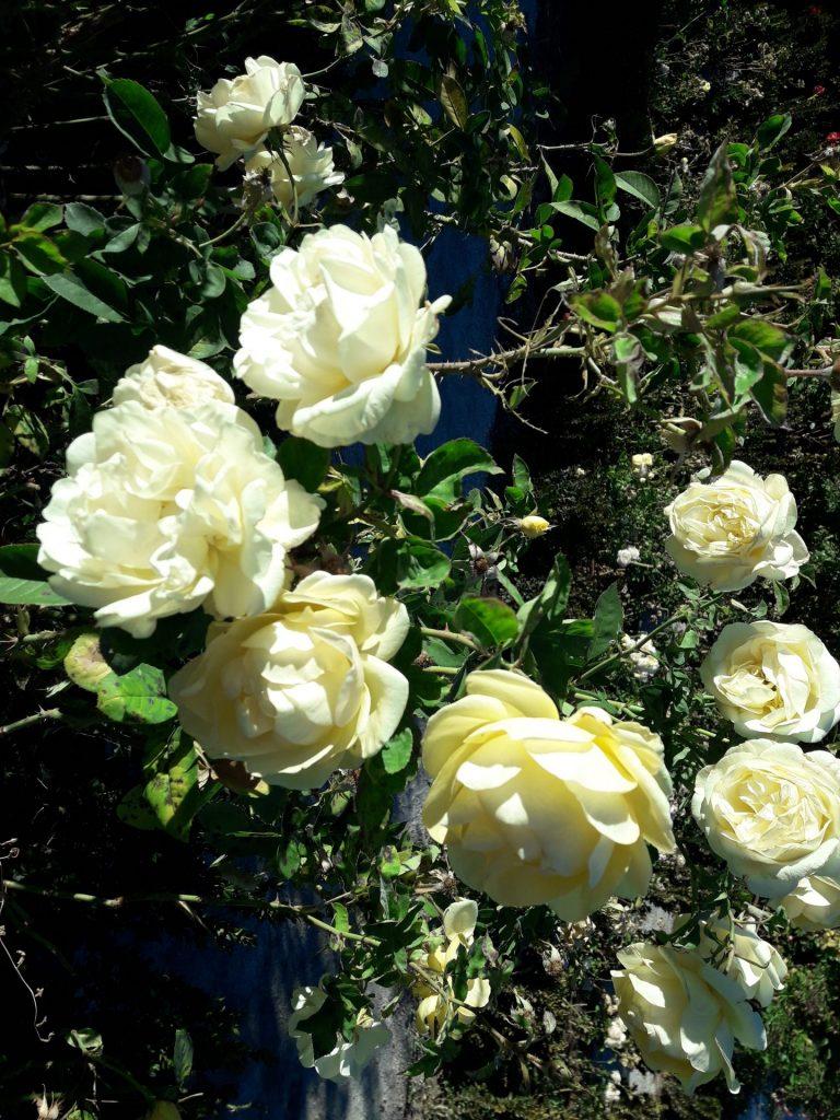 rosaleda-retiro