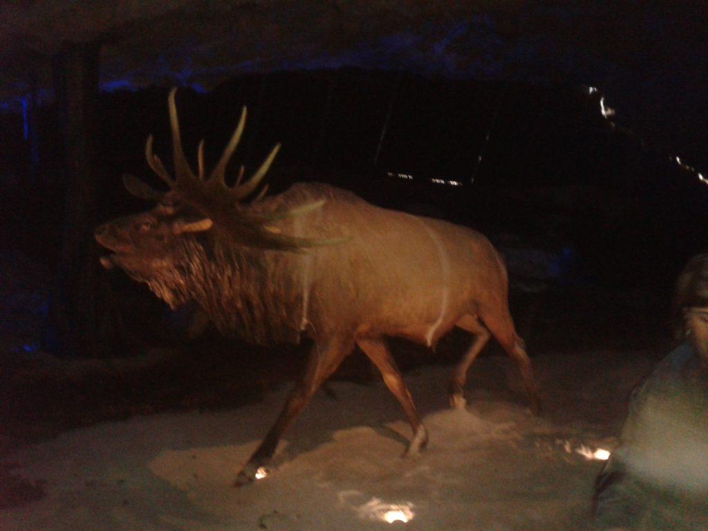 ciervo-gigante-avin